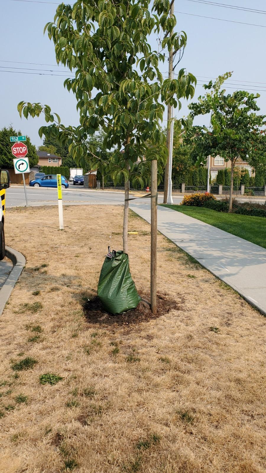 tree watering bags don't always drain properly