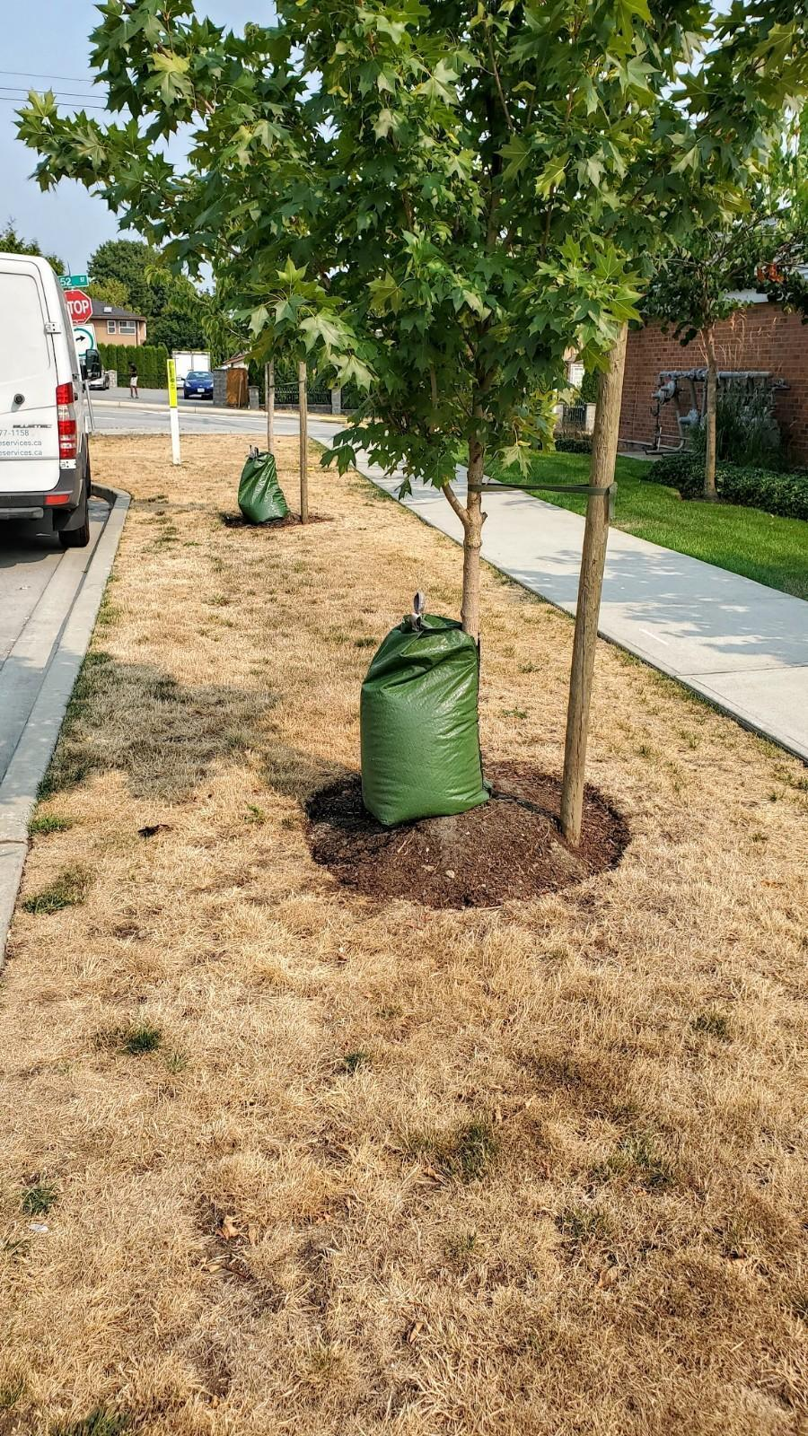 tree watering bags hang and pull on young trees when they don't drain properly